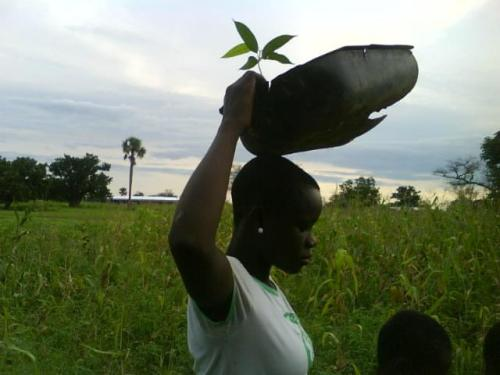 Carrying seedlings