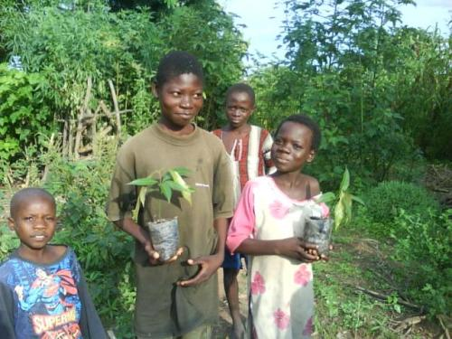 Basket makers' children help plant mango seedlings