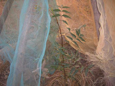 Seedlings Protected by Mesh Ghana