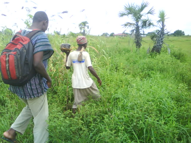 Tree Planting in the Wet Season Ghana